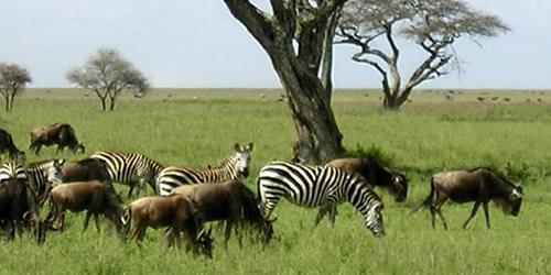 viaggio tanzania