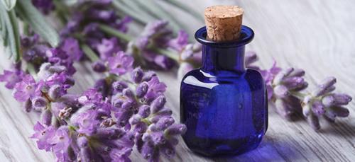 La Provenza e i benefici della lavanda per la pelle